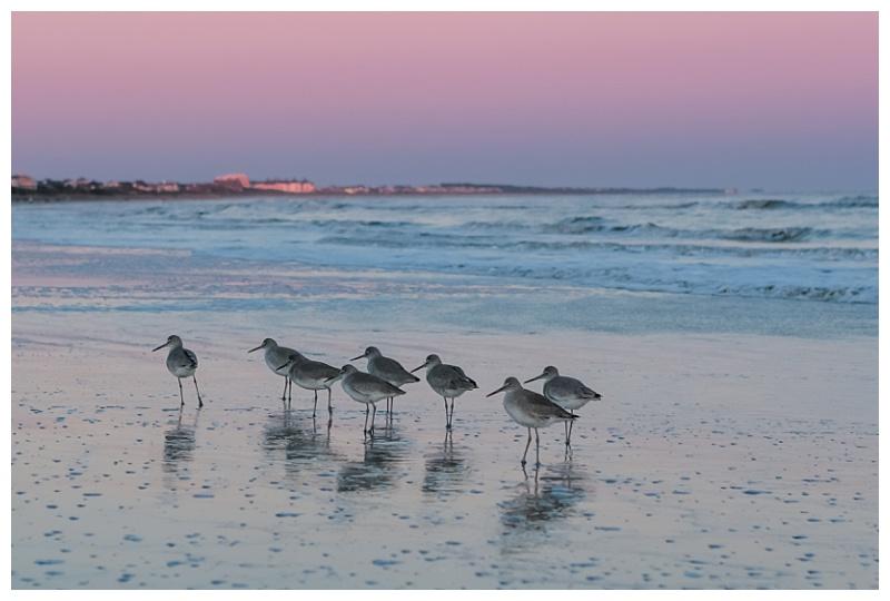 Sunset on Kiawah island with birds